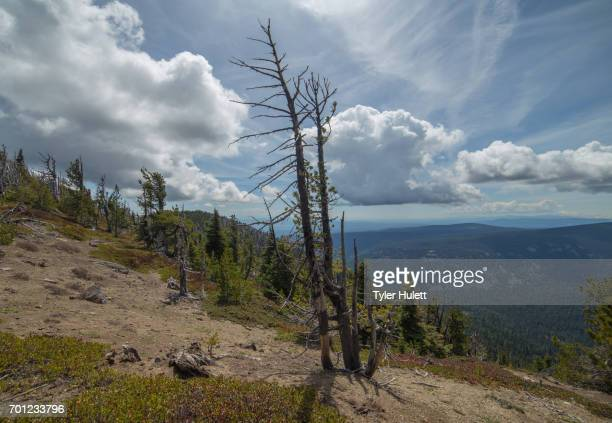 snag on the east face of mt. hood from lookout mountain. - pacific crest trail stock pictures, royalty-free photos & images