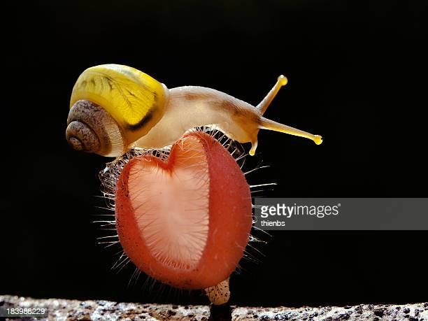 snail and red shroom - magic mushroom stock photos and pictures