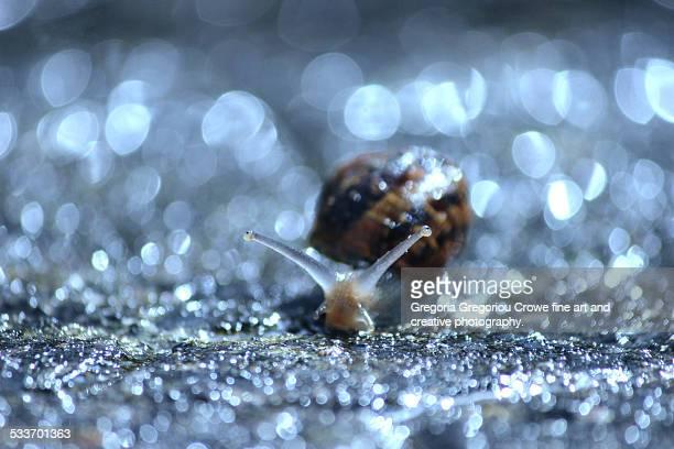snail close up - gregoria gregoriou crowe fine art and creative photography - fotografias e filmes do acervo