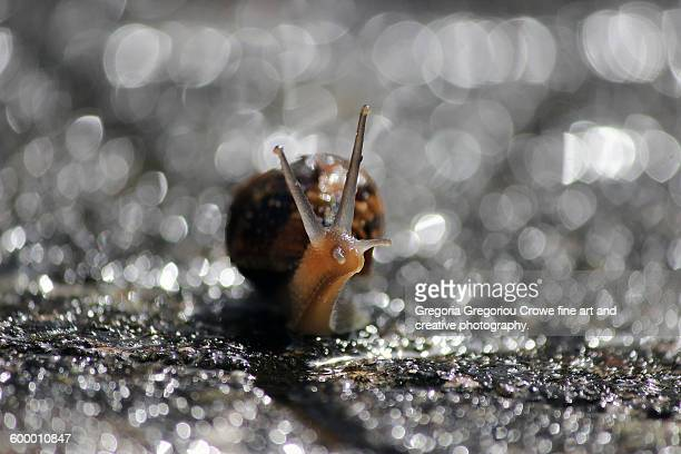 snail close-up - gregoria gregoriou crowe fine art and creative photography stock pictures, royalty-free photos & images