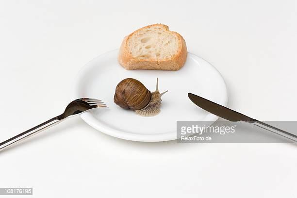 Weinbergschnecke Krabbeln auf weißen Teller mit Gabel und Messer-Brot,