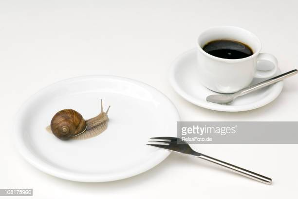 Snail Crawling on White Plate with Coffee Cup Near