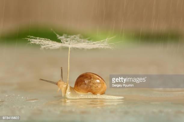 snail in the rain - pluie humour photos et images de collection