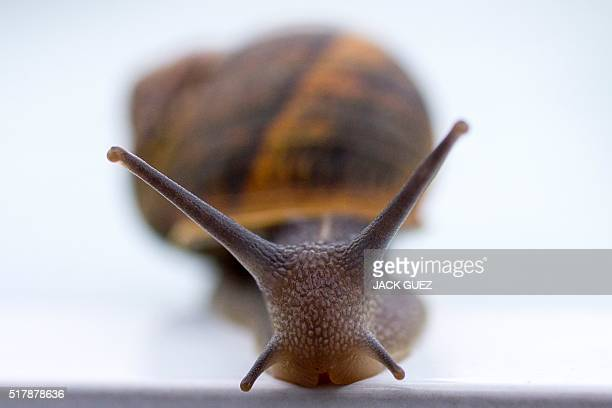 A snail is pictured on March 28 in the Israeli coastal city of Netanya / AFP / JACK GUEZ