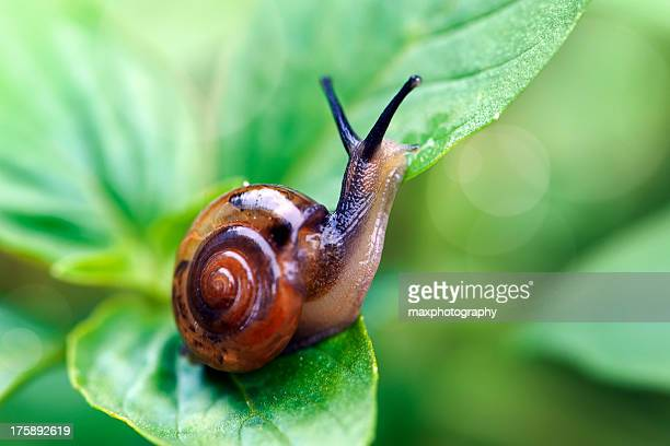 snail macro - snail stock photos and pictures