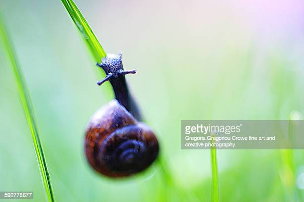 snail on a blade of grass - gregoria gregoriou crowe fine art and creative photography fotografías e imágenes de stock