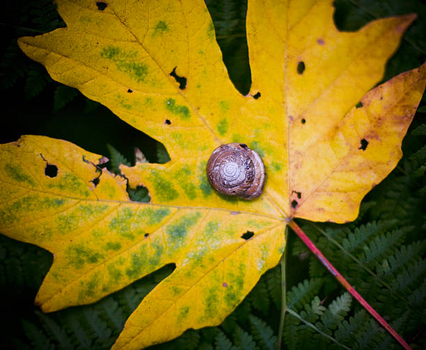 Snail On A Yellow Leaf On The Forest Floor Wall Art