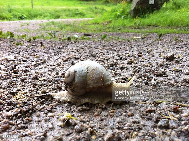 Snail On Field