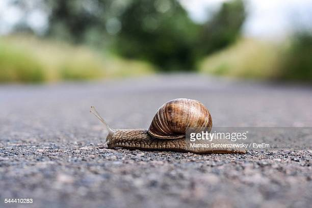 snail on road - snail stock photos and pictures