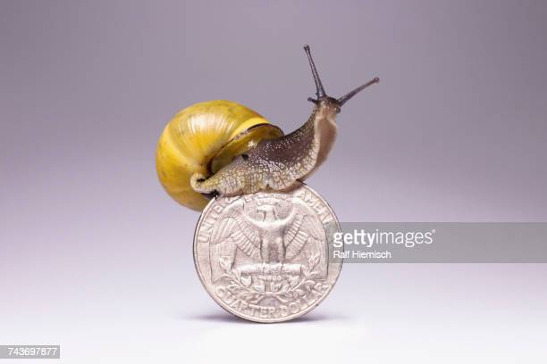 Snail on top of US quarter coin against gray background