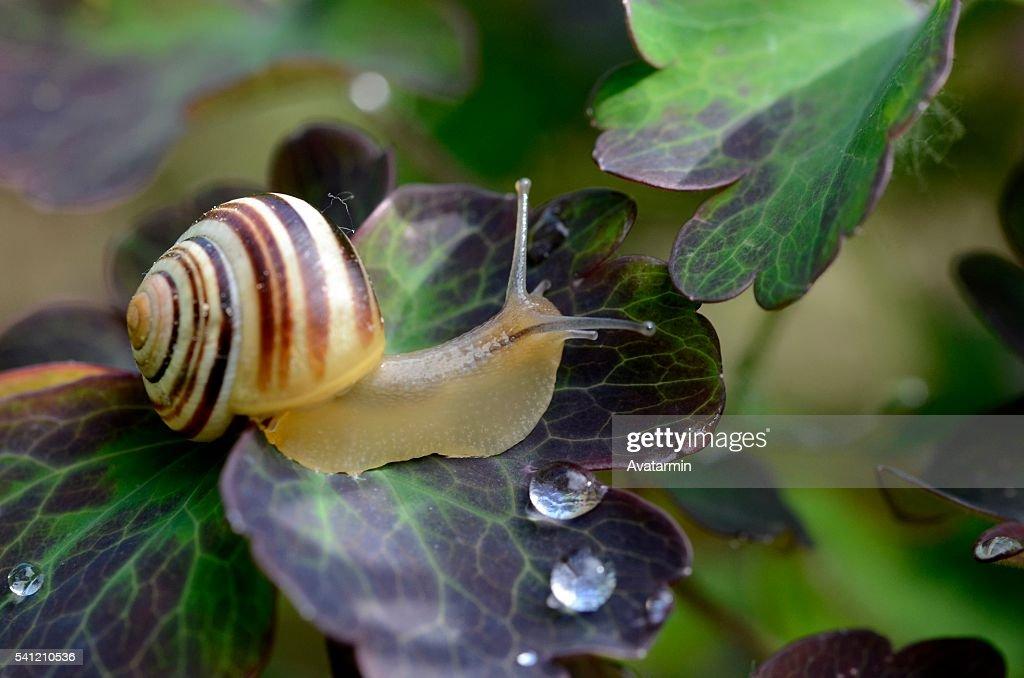 snail : Foto de stock
