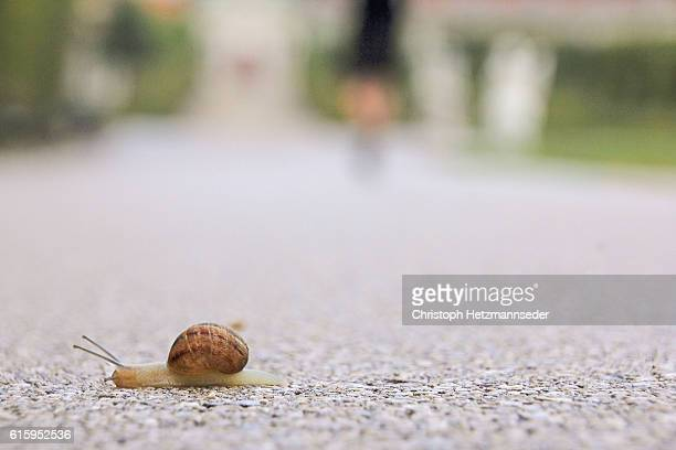 snail - snail stock photos and pictures