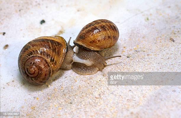 Snail Reproduction
