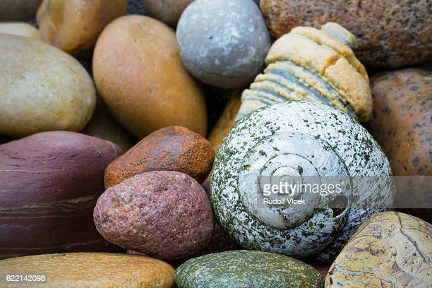 Snail shell and colourful pebbles close up