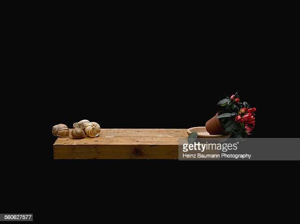 snail shells and falling flowerpot - heinz baumann photography stock-fotos und bilder