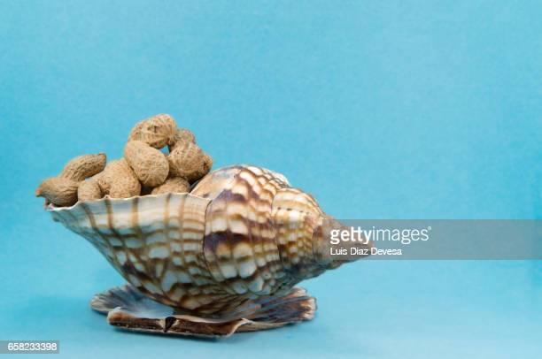 snail trumpet filled with peanuts