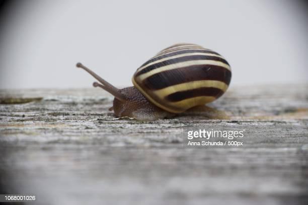 Snail walking on wooden plank