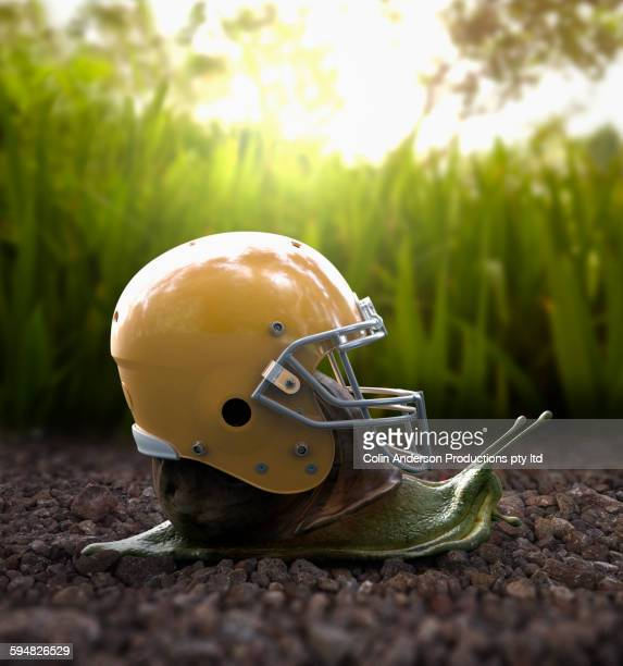 Snail wearing football helmet on shell in gravel