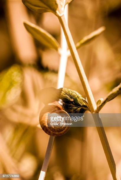 snailie - oskar stock pictures, royalty-free photos & images