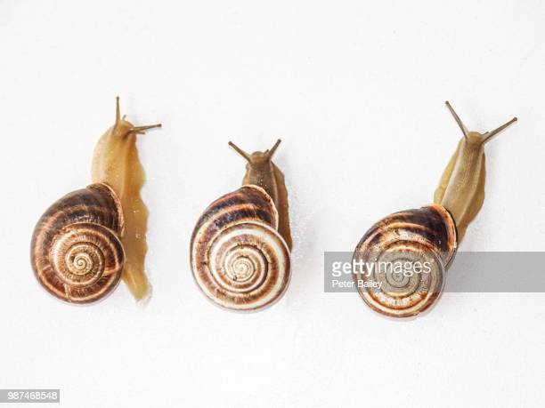 snailrace.jpg - snail stock photos and pictures