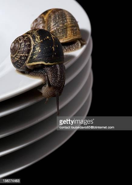 snails on dinner plates - am rand stock-fotos und bilder
