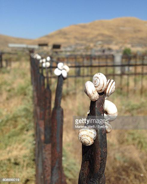 snails on fence during sunny day - weiß stock pictures, royalty-free photos & images