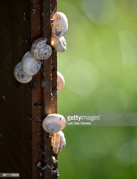 snails - giant african land snail stock pictures, royalty-free photos & images