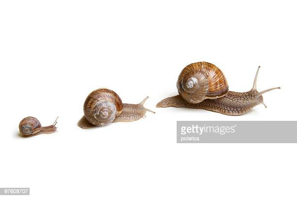 snails - snail stock photos and pictures