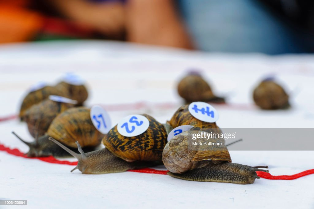 Racing Snails Line-up For The World Championships