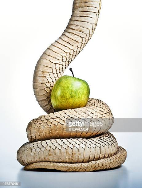 snake and apple, the original sin