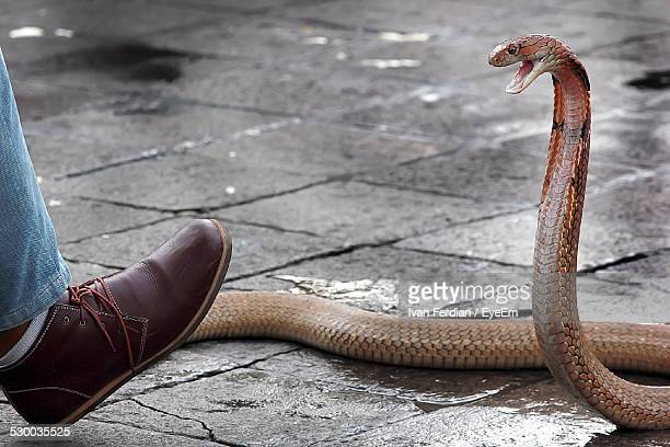 snake attacking human foot - animals attacking stock pictures, royalty-free photos & images