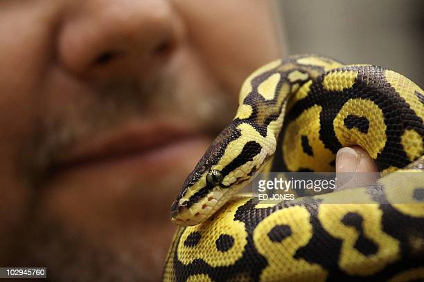 60 Top Ball Python Pictures, Photos, & Images - Getty Images
