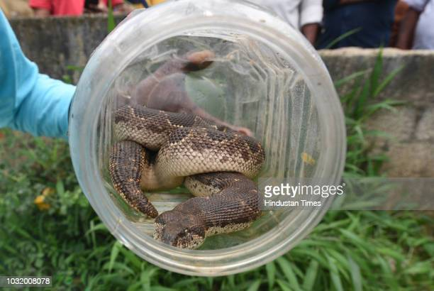 Snake catcher Vava Suresh a living encyclopedia on snakes was among those brought in to help with the situation here seen on August 23 2018 in Kerala...