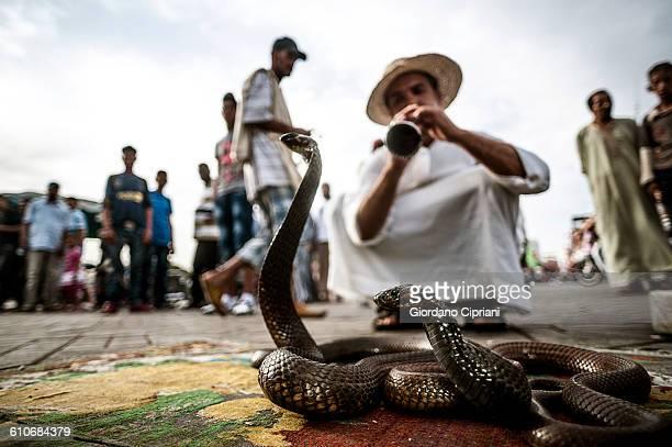 Snake Charmer in Djemaa El-fna Square, Marrakech.