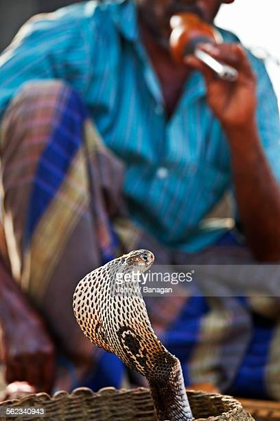 Snake charmer with Cobra, Colombo