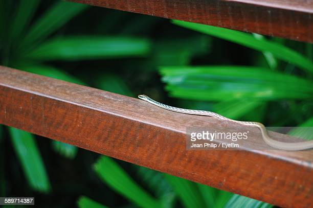 Snake Crawling On Wooden Railing