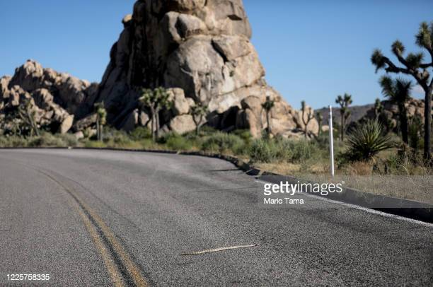 Snake crosses a roadway in Joshua Tree National Park one day after the park reopened after being closed for two months due to the coronavirus...