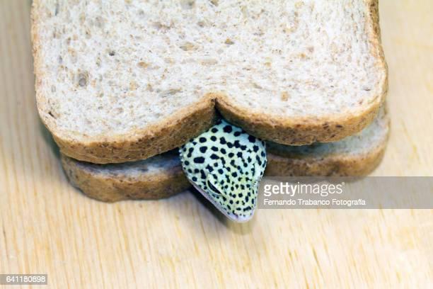 snake head on a sandwich with bread