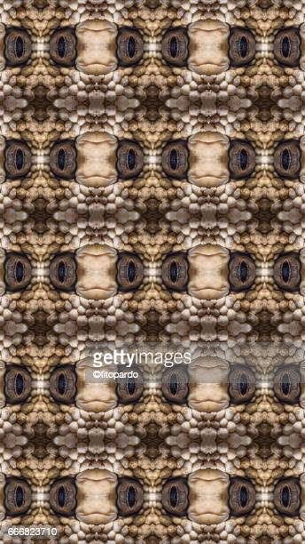 snake kaleidoscope pattern - reptile pattern stock pictures, royalty-free photos & images
