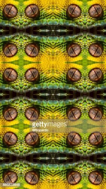 Snake kaleidoscope pattern