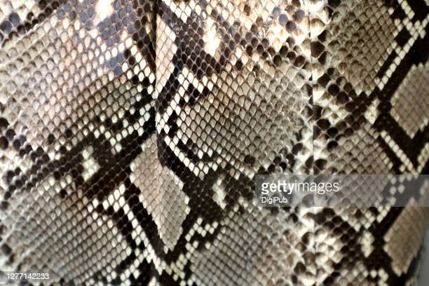 snake leather pattern and texture - snakeskin stock pictures, royalty-free photos & images