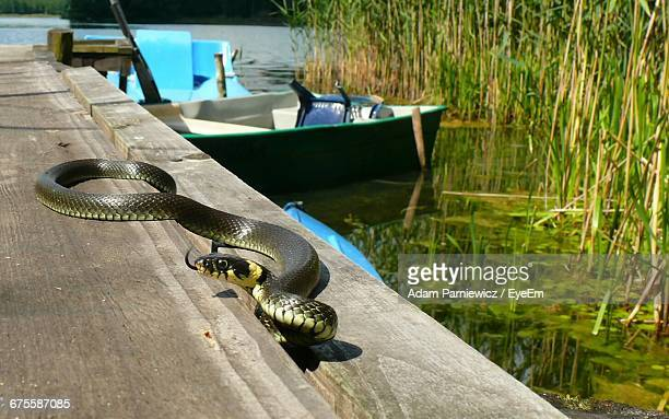 Snake On Pier Against Boat Moored In Lake