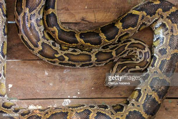 snake pattern - burmese python stock pictures, royalty-free photos & images