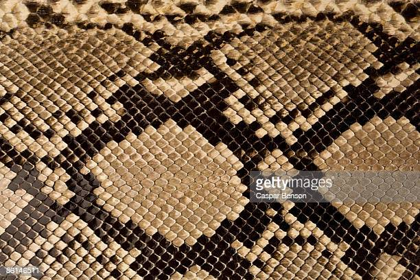 snake skin - reptile pattern stock pictures, royalty-free photos & images