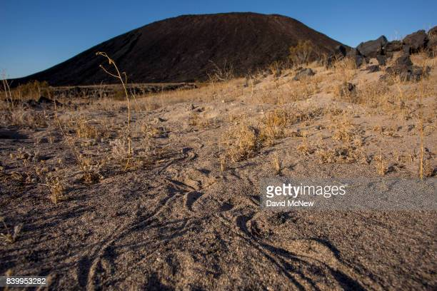 Snake tracks are seen with Amboy Crater in the distance at Mojave Trails National Monument on August 27 2017 near Essex California The 16 millionacre...
