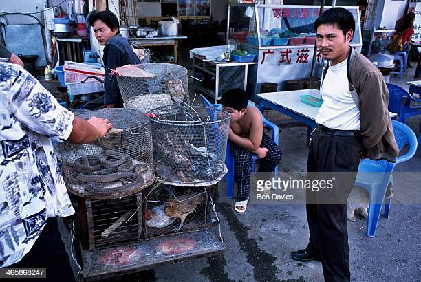 Snakes badgers rare birds pangolins and monkeys are sold in the wildlife markets of Mongla a remote town on the border with China Much of the...