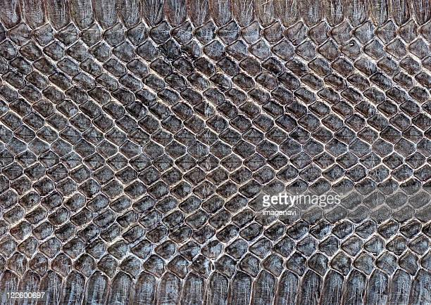 snakeskin - reptile pattern stock pictures, royalty-free photos & images