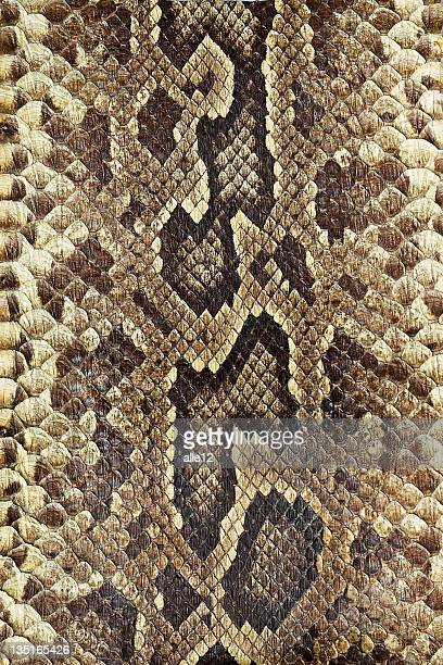 snakeskin - snake stock pictures, royalty-free photos & images