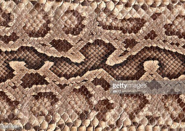 snakeskin - python snake stock pictures, royalty-free photos & images