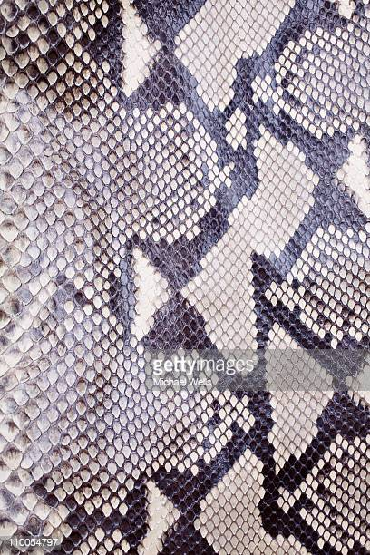 Snakeskin up close